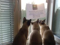 Защитная сетка Banzai на окна для Котов
