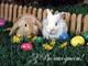 Коллектив ЧП Юсупов (Winnova) поздравляет Вас с наступающими пасхальными праздниками!