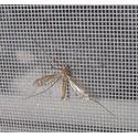 Лучшая защита от насекомых