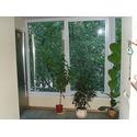 Окна из профиля Winbau